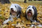Triss and Ciri, November 2009
