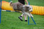 MR BC agility 2011